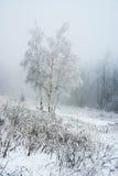 Täckningsbjörkträd på den djupfrysta vinterskogen Royaltyfri Fotografi
