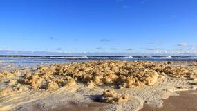 Täckt Östersjön för hav bubblor strand royaltyfri foto