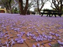 Täckt i lilor royaltyfri fotografi