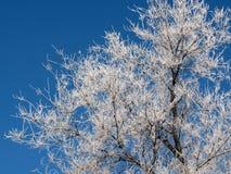 Täckt med rimfrost träd Arkivbilder