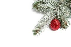 Täckt med snöfilialen av en julgran och en röd boll Arkivbilder