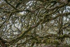 Täckt mossa förgrena sig i djup skog Arkivfoto