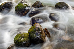 Täckt mossa vaggar i banan av vatten från en liten vik Royaltyfri Fotografi