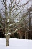 Täckt snö royaltyfri fotografi
