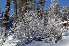 Täckt snö royaltyfri foto