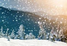 Täckt snö böjde sörjer lite träd i vinterberg archy royaltyfri bild