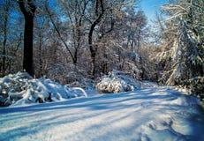 Täckt snö parkerar med eftermiddagsolen Royaltyfri Foto