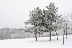 Täckt snö sörjer Royaltyfri Foto