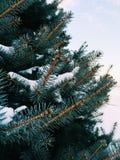 Täckt snö sörjer Arkivfoton