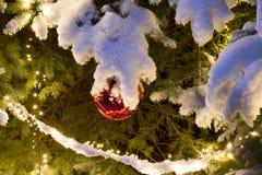 Täckt snö sörjer trädet med belysning, och röd jul för exponeringsglasboll smyckar, utomhus- arkivfoton