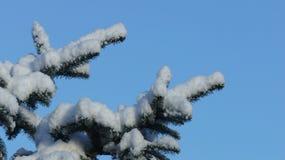 Täckt snö sörjer trädfilialen mot en klar blå himmel royaltyfri bild