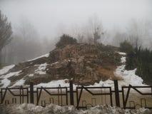 Täckt snö vaggar & växter Arkivbild