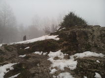 Täckt snö vaggar & växter Royaltyfria Foton