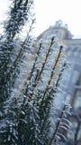 Täckte blommabuskar snöar med suddig byggnad på bakgrunden royaltyfri foto