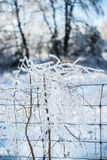 Is täckte filialer tilltrasslade i trådstaket Arkivbild