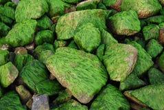 Täckte stenar Fotografering för Bildbyråer