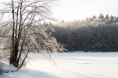 Is-täckte träd Arkivfoton