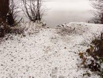 täckte träd fryste sjöplatsen för lakesiden övervintrar den snö december Royaltyfria Bilder