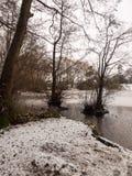 täckte träd fryste sjöplatsen för lakesiden övervintrar den snö december Royaltyfri Foto