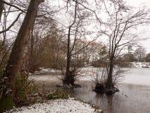 täckte träd fryste sjöplatsen för lakesiden övervintrar den snö december Royaltyfri Fotografi
