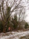 täckte träd fryste sjöplatsen för lakesiden övervintrar den snö december royaltyfria foton