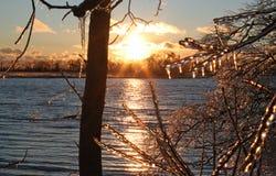 Is-täckte träd längs den storslagna floden royaltyfri foto
