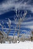 Is täckte träd på en förkylningvinterdag, den Kosciuszko nationalparken NSW Australien Arkivbilder