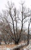 Is täckte trädet i en bogle mot en förkylning, grå färgvinterhimmel Royaltyfri Bild