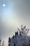 Abstrakt begrepp för Trees för Sun dimma passerar den Snow täckte vintergröna på Snoqualme Royaltyfri Foto