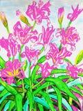 Tägliche Lilien des Rosas Stockfoto