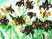 Tägliche Lilien des Schwarzen Stockfoto