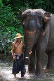 Tägliches Elefantbad Stockfoto