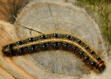 Tält Caterpillar Arkivfoto