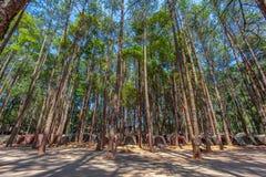 tält för att campa under sörjer träd på det höga berget av den Doi Inthanon nationalparken arkivfoto