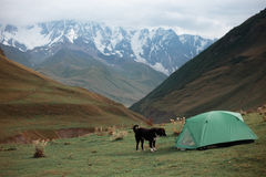 Tält i bergen och bredvid en hund Fotografering för Bildbyråer