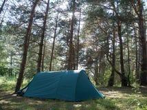 Tält i en pinjeskog om den soliga dagen Royaltyfri Fotografi