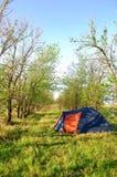Tält i skogen i sommar royaltyfri foto