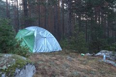 Tält som campar i skogen med högväxta träd Royaltyfri Fotografi