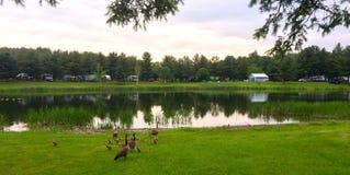 Tältplatssikt av sjön med änder Arkivbilder