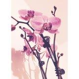 Tämjt exotiskt Royaltyfria Bilder