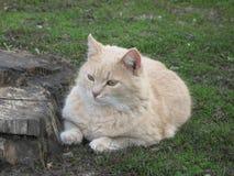 Tänd en liten katt arkivfoto