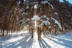 Tänd och skuggor i den prydliga skogen för vintern i vinter arkivfoto