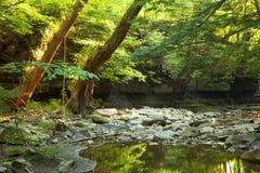 Tänd skog Royaltyfri Bild