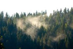Tänd till och med lappar av dimma i skogen royaltyfria bilder
