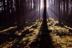 Tända i skogen Arkivfoto