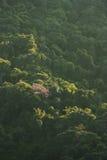 Tända i skogen Arkivbilder