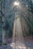 Tända i skogen Royaltyfri Foto