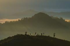 Tända med dimma Arkivbilder