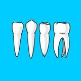 tänder Arkivfoto