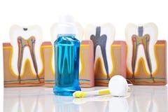 tänder för utrustning för omsorgskontroll tand- royaltyfria foton